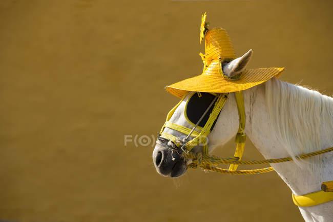 Horse with sombrero in city of Izamal, Yucatan, Mexico — стокове фото