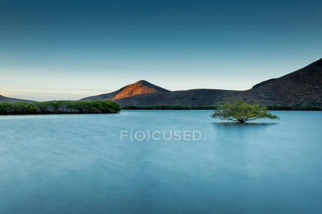 Живописный вид на залив прибрежных и листва — стоковое фото