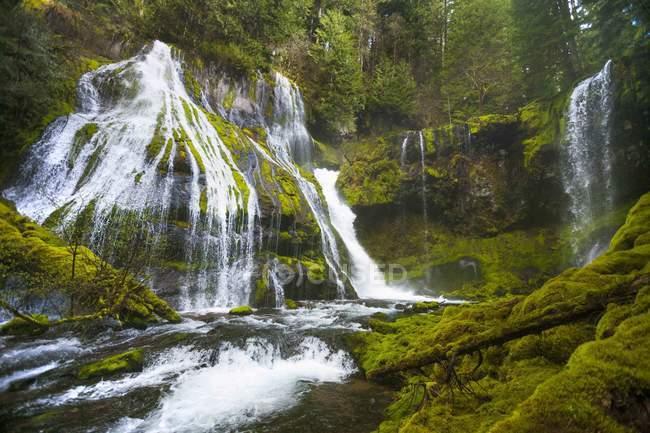 Cascate che precipitano su scogliere con vegetazione lussureggiante a Panther Creek Falls a Carson, Washington — Foto stock