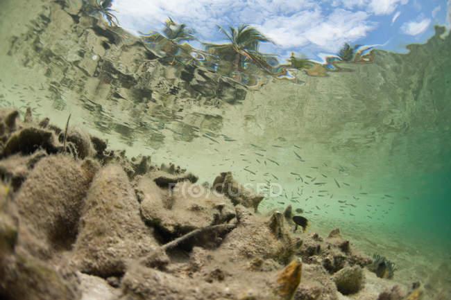 Крихітні риби плавають поруч кинутих раковин на піщаному пляжі на Кей в Белізі — стокове фото