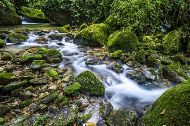 Atlantic Rainforest river in Serrinha do Alambari Ecological Reserve, Rio de Janeiro, Brazil — Stock Photo