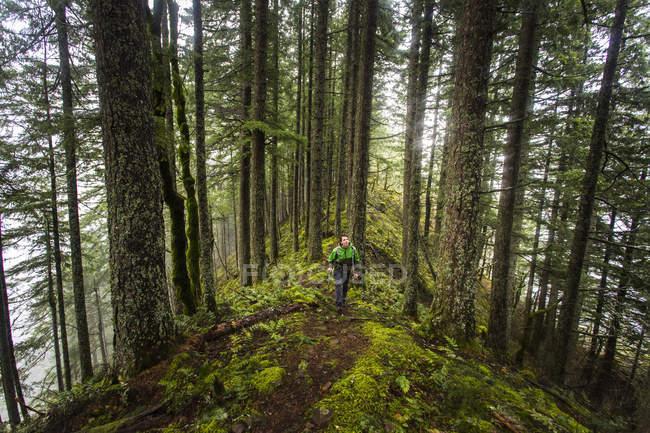 Людина дивиться на дерева в той час як походи по моховий хребет — стокове фото