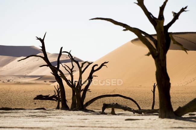 Beautiful scenery with dead trees in desert, Deadvlei, Sossusvlei, Namib Naukluft National Park, Namib Desert, Namibia — Stock Photo