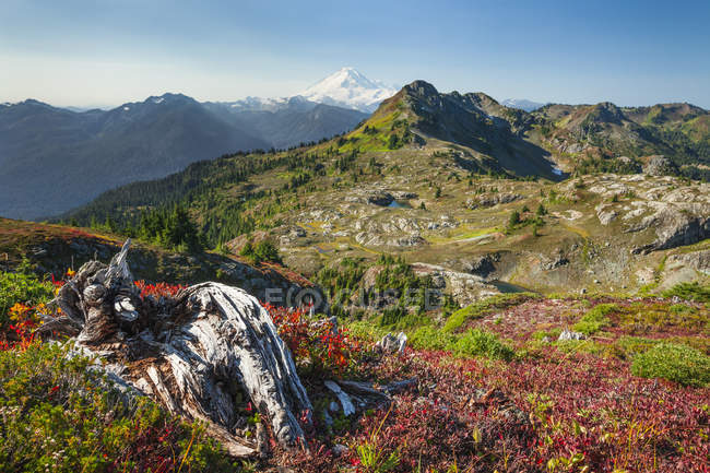 Herbst auf Tomyhoi Wiesen in North Cascade Nationalpark — Stockfoto