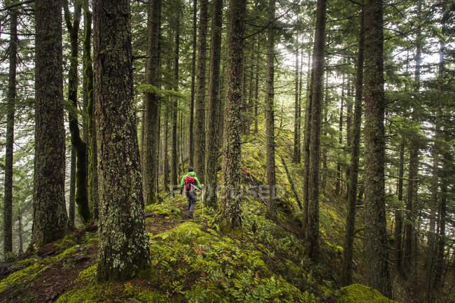 Vue arrière de la randonnée d'homme dans la forêt sur la crête de Mossy — Photo de stock