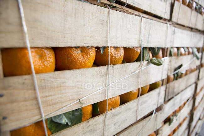 Кратет апельсины для паруса на открытом воздухе фруктового рынка — стоковое фото