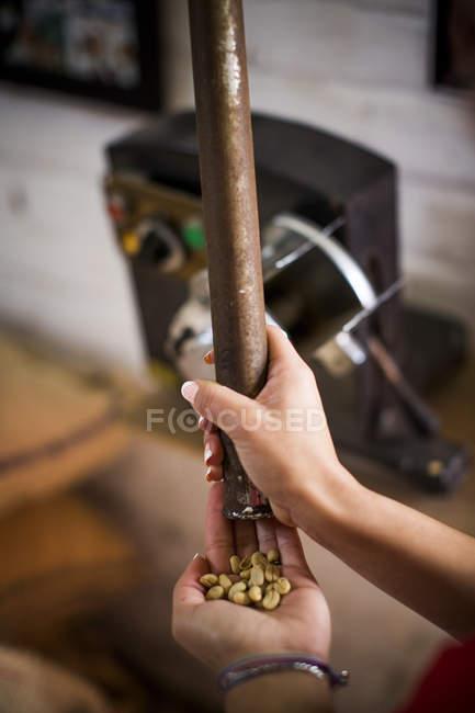 Молода жінка тести кавових зерен в той час як вони обсмажують на кавовим об'єкті в сільській Колумбії. — стокове фото
