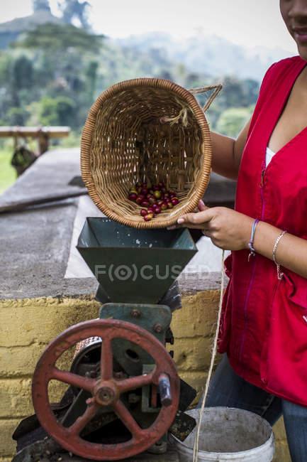 Femme versant des grains de café dans le broyeur de café — Photo de stock