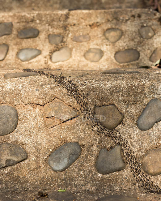 Army of ants marching up stone staircase — Fotografia de Stock