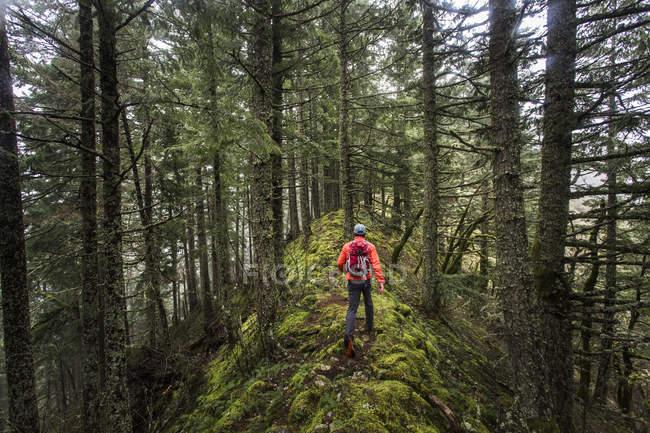 Людина походи на моховий хребет в лісі — стокове фото