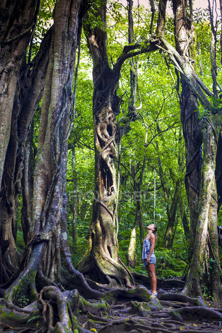 Vista lateral da mulher sob uma velha árvore — Fotografia de Stock