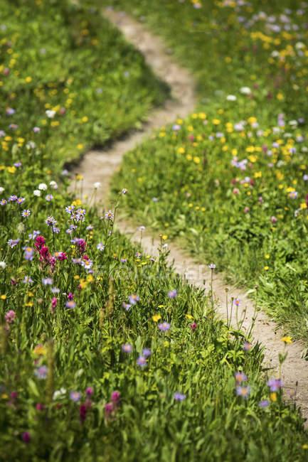 Vista de alto ângulo de flores silvestres em Banff — Fotografia de Stock