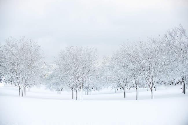 Міських листяних гаї вкрите снігом під час blizzard в Денвері, штат Колорадо — стокове фото