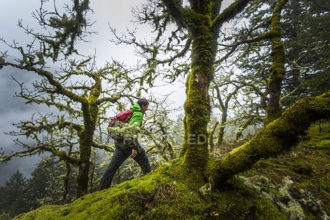 Randonnée d'homme dans la forêt par de grands arbres de cèdre — Photo de stock