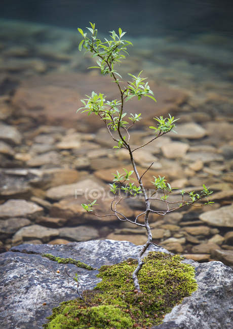 Close-up Of Tree Growing On Rock — Stock Photo
