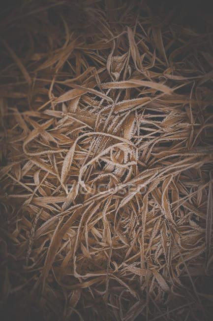 Close-up vista de hoar geada cobre grama de campo — Fotografia de Stock
