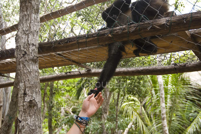 Young woman reaching out to monkey in Mexico — Stock Photo