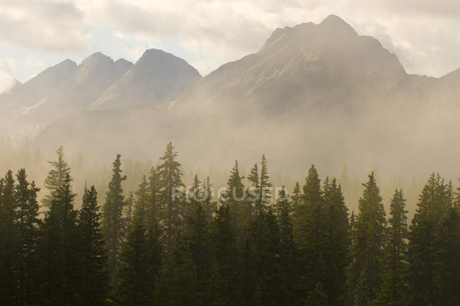 Genadier Mountain Range and morning fog above spruce trees on Molas Pass, San Juan National Forest, Silverton, Colorado — Stock Photo