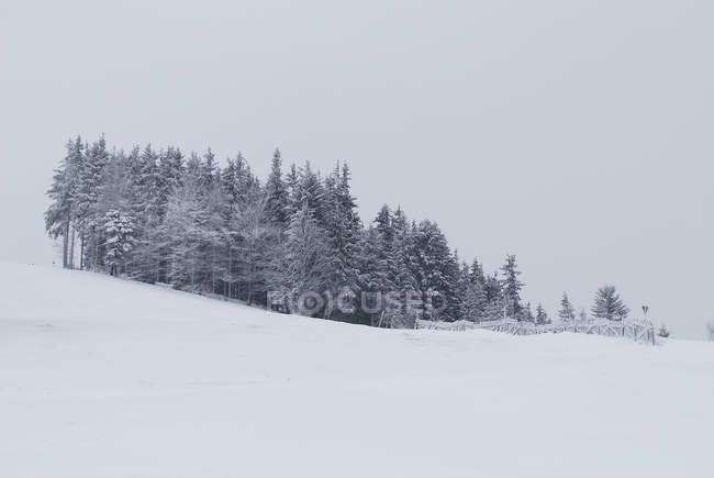 Frozen trees on snow covered slope — Stock Photo