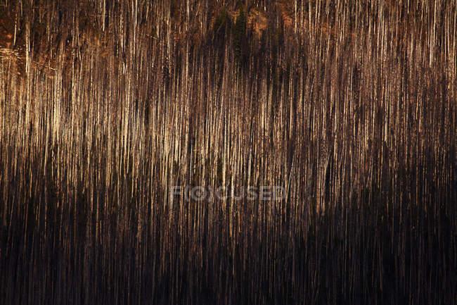 Палена дерев текстури при яскравому сонячному світлі — стокове фото