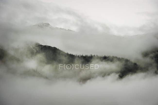 Escena de la montaña con bosques en la colina de haze - foto de stock