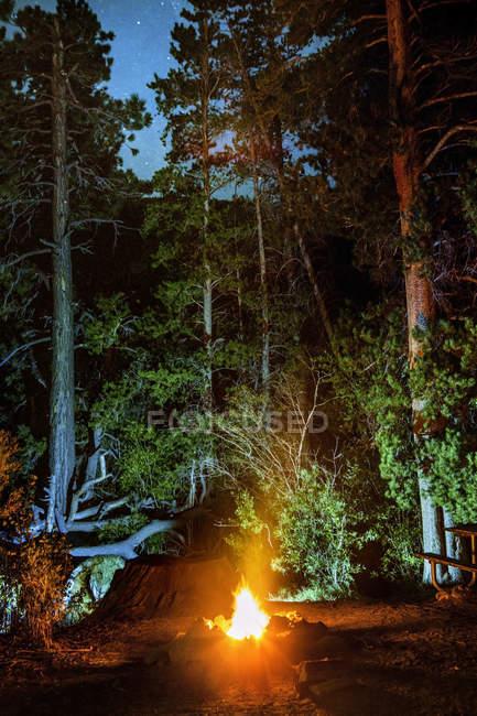 Éclairage des grands arbres dans la nuit de feu de camp — Photo de stock