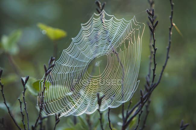 Gotas de orvalho da manhã em uma teia de aranha — Fotografia de Stock