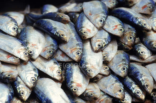 Pile of fish for sale at street market — Stock Photo