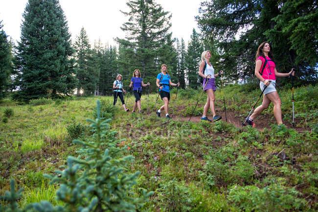 Weibliche Gruppenüberschrift unten Wanderweg in Colorado Wald wandern — Stockfoto