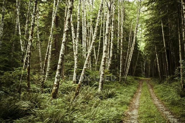 Carretera en escenario de exuberante bosque verde - foto de stock