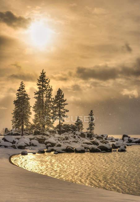 Замороженные сосен на берегу озера Тахо — стоковое фото