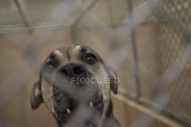 Собака, глядя сквозь ячейки сетки с открытым ртом в приют для животных — стоковое фото