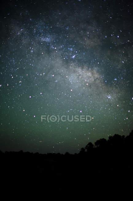 Чумацький шлях зірочок сяє над темний ліс — стокове фото