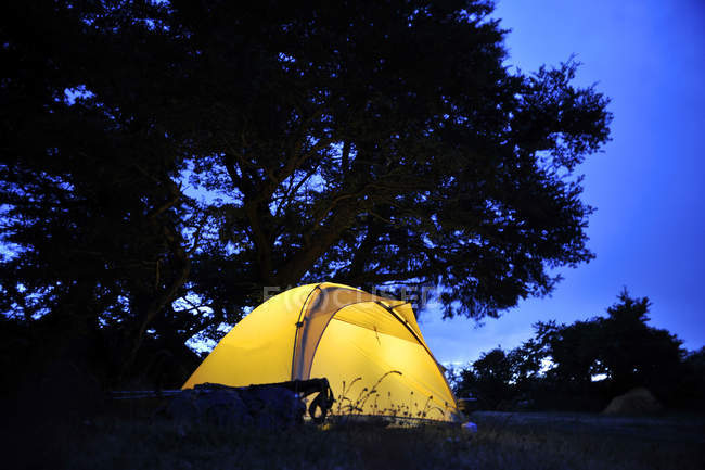 Zelt unter Bäumen, die nachts beleuchtet werden — Stockfoto