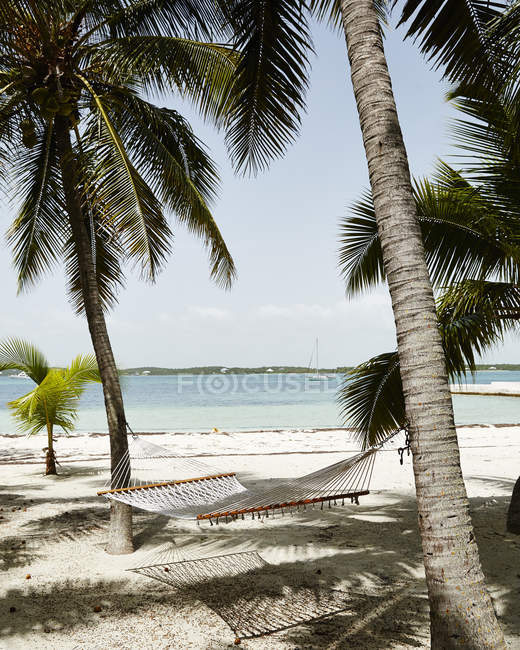 Hammock hanging on palms at sandy beach — Stock Photo