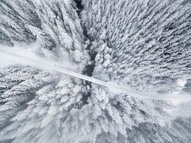 Аэрофотоснимок сосновых деревьев в лесу покрытые снегом — стоковое фото