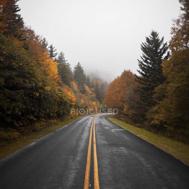 Пишні гірській дорозі між осінній ліс — стокове фото