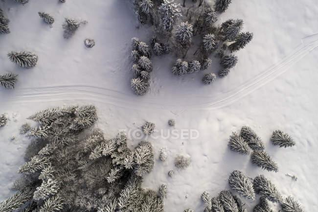 Аэрофотоснимок заснеженные ели и дороги — стоковое фото