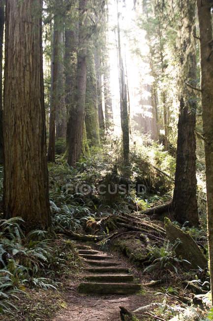 Escadas cobertas de musgo na floresta em contraluz — Fotografia de Stock