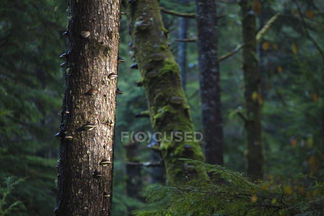 Деревья покрыты дерево грибов и Мосс в темный лес — стоковое фото