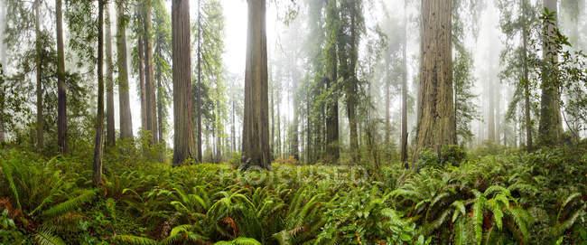 Árvores e arbustos verdes no Parque Nacional de sequoias — Fotografia de Stock