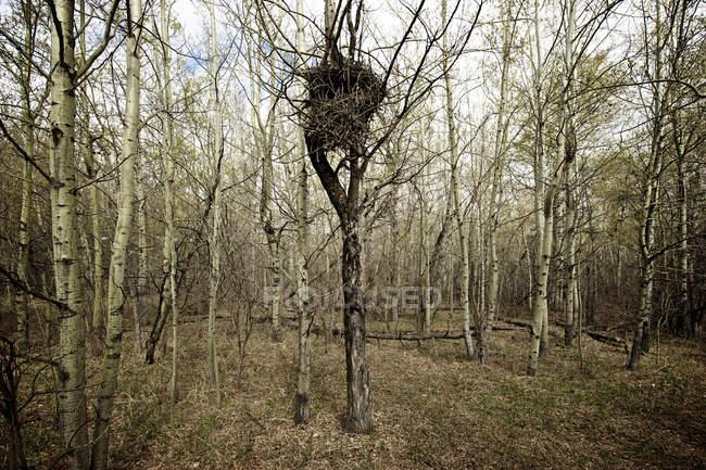 Ninho de pássaro na árvore no parque outono — Fotografia de Stock