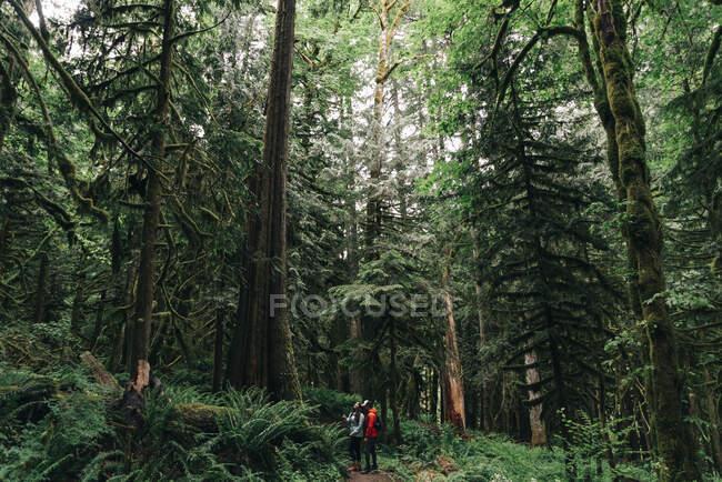 Um jovem casal desfruta de uma caminhada em uma floresta no noroeste do Pacífico — Fotografia de Stock