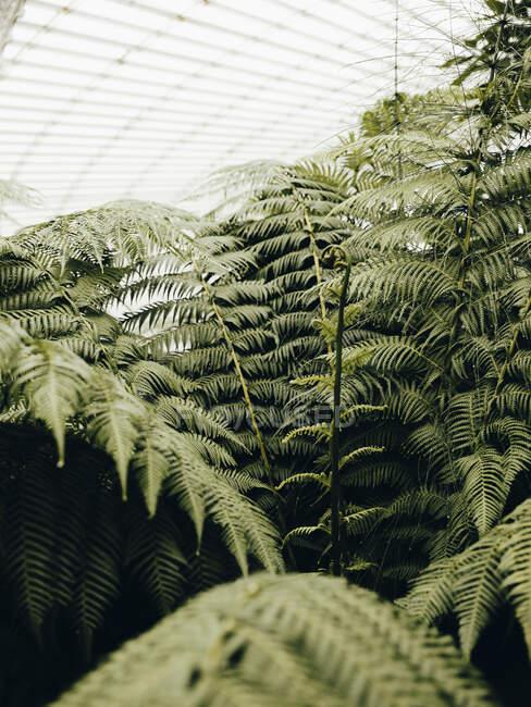 Детальная съёмка папоротников в ботаническом саду Глазго — стоковое фото