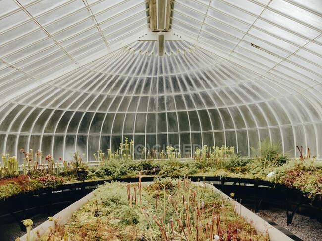 Piante carnivore nei Giardini Botanici di Glasgow — Foto stock
