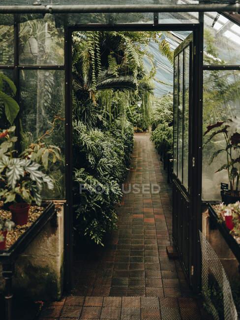 Looking through door at Glasgow Botanic Gardens — Stock Photo