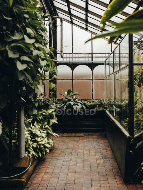 Dentro ai Giardini Botanici Glassascar — Foto stock