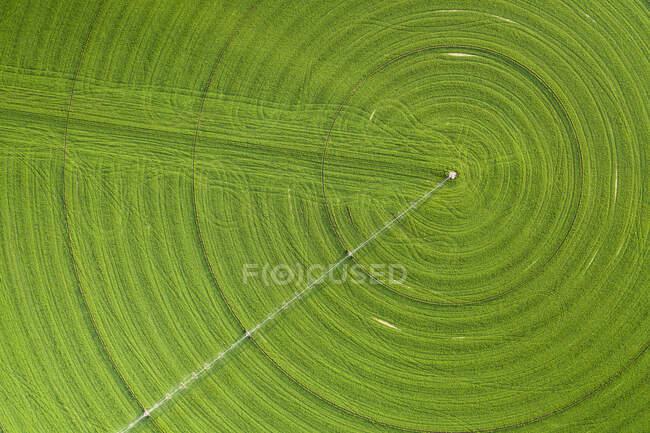 Círculos nas plantações verdes crescendo em um deserto de Nevada Remover — Fotografia de Stock