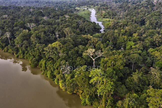 Árboles y vegetación en la selva y bosque denso de Dzanga Sangha. República Centroafricana. - foto de stock