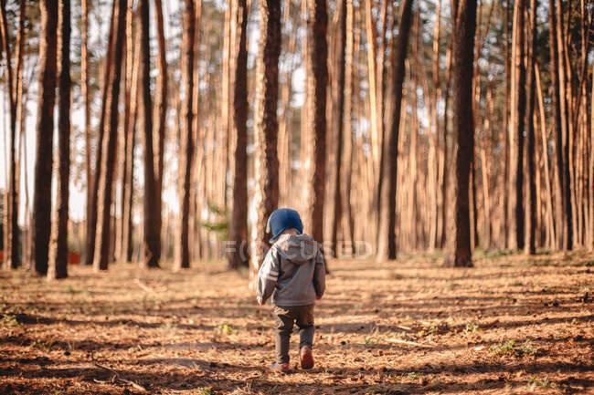 Vue arrière du bébé garçon marchant dans la forêt pendant la journée ensoleillée en automne — Photo de stock